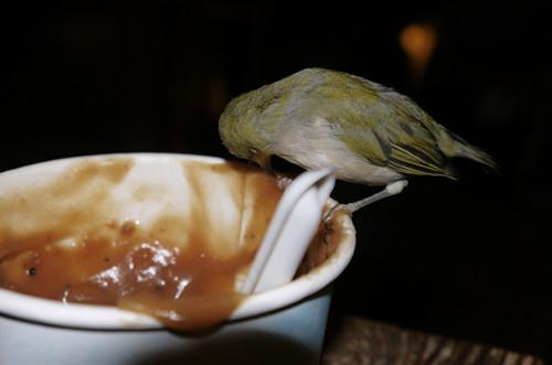 三峽染藍布.喝茶/吃牛角.鶯歌你濃我濃/揑陶土賞瓷器/大溪賞花趣