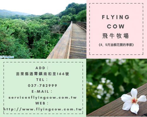 FLYING COW飛牛牧場